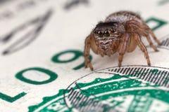 跳跃的蜘蛛和一百美元 免版税库存照片
