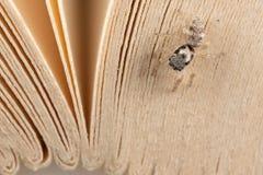 跳跃的蜘蛛和书板料 库存照片
