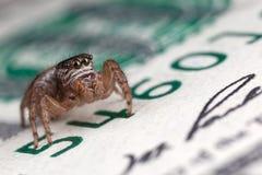 跳跃的蜘蛛和金钱 库存图片