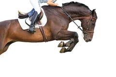 跳跃的马 免版税库存照片