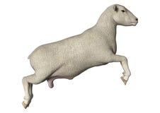 跳跃的绵羊 库存照片