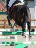 跳跃通过障碍的体育马 跳跃在细节的马展示 库存照片
