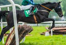 跳跃障碍的赛马和骑师 免版税库存图片