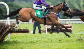 跳跃障碍的赛马和骑师 免版税库存照片