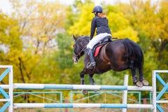 跳过障碍的海湾马的年轻车手女孩 免版税图库摄影