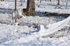跳铁丝网的狗 免版税库存照片