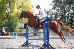 跳马球车手的驯马骑马马马现出轮廓体育运动向量 跳过障碍的女孩 免版税库存图片
