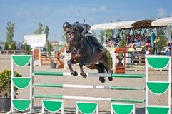 跳马球车手的驯马骑马马马现出轮廓体育运动向量 库存图片