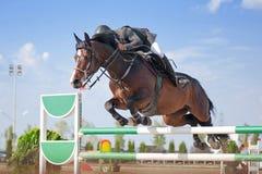 跳马球车手的驯马骑马马马现出轮廓体育运动向量 免版税库存照片