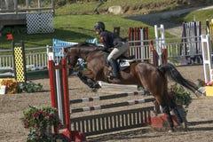 跳马球车手的驯马骑马马马现出轮廓体育运动向量 库存照片