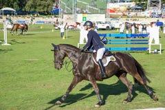 跳马球车手的驯马骑马马马现出轮廓体育运动向量 免版税库存图片