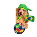 踢橄榄球的狗 免版税库存图片