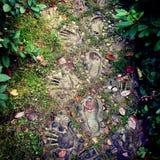 踪影在神秘的森林里 免版税库存图片