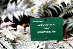 蹄盖蕨属niponicum的金属植物标志 库存照片