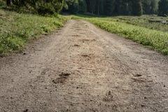 蹄马的踪影在含沙路的在森林 免版税库存照片