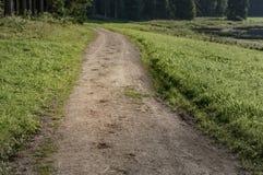 蹄马的踪影在含沙路的在森林 库存图片