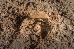蹄马的踪影在沙子的 免版税库存照片