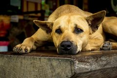 蹲下在长凳的狗 免版税库存图片