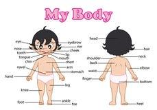 身体的词汇量零件 库存图片