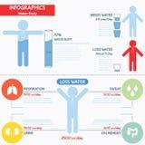 水身体Infographics  向量例证
