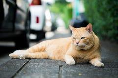 躺下在地板上的一只棕色逗人喜爱的猫 库存照片