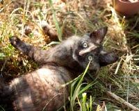 躺下在草的小的全部赌注 免版税库存图片
