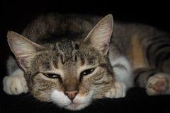 躺下在长沙发的逗人喜爱的困猫 库存照片