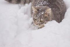 躺下在雪的家猫在多云天 免版税库存照片