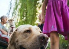 躺下大白色的狗 看狗 拉布拉多头 有她的狗的小女孩 免版税图库摄影