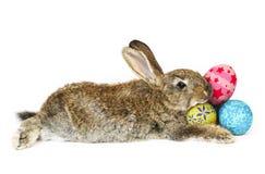 躺下的兔子 免版税库存图片