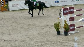 车手和马在跳跃在骑马事件的展示 股票视频