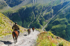 车手在山的一匹马去 库存照片