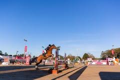 车手马跳跃的竞技场 库存图片
