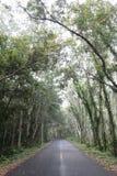 车行道在森林里 免版税库存照片
