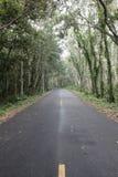 车行道在森林里 免版税库存图片