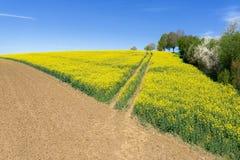 车道到一个开花的油菜籽领域里 库存图片