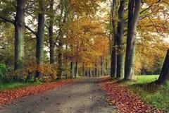 车道在一个森林里在秋天与黄色和红色叶子 免版税库存照片