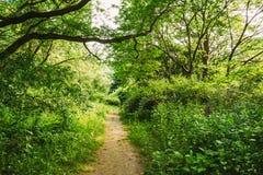 车道,道路,在夏天落叶林树的路 免版税库存图片