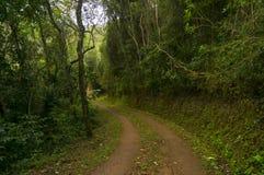 轨道通过森林 免版税库存照片