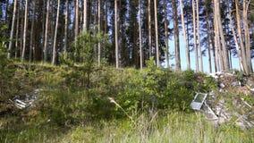转储垃圾在森林里 股票视频