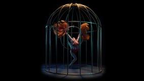 转动在一只笼子的一个箍的杂技演员与羽毛在他们的手上 黑色背景 股票录像