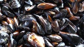 转动未加工的海的淡菜 股票视频