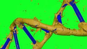 转动的蓝色脱氧核糖核酸形成通过剥皮金黄皮肤有绿色背景 皇族释放例证