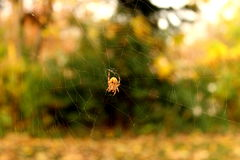 转动的蜘蛛网 库存照片