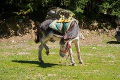 转动的驴  库存照片