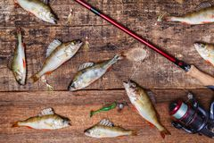 转动,鱼和诱饵在木背景 免版税图库摄影