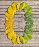 转折秋天季节上色了在木桌上的槭树叶子 库存图片