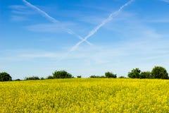 转换轨迹和油菜籽领域 库存图片