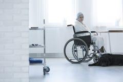 轮椅和狗的妇女 库存图片
