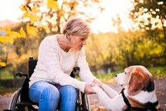 轮椅的一名资深妇女有在秋天自然的狗的 库存图片